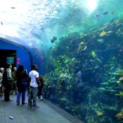 Georgia Aquarium 1