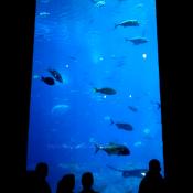 Georgia Aquarium Tank 1