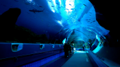 Georgia Aquarium Tunnel 1