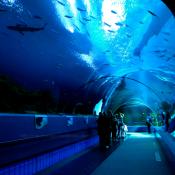Georgia Aquarium Tunnel 1