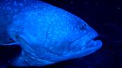 Georgia Aquarium Fish 1