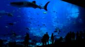 Georgia Aquarium Tank 2
