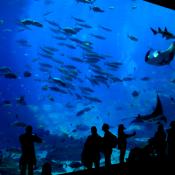 Georgia Aquarium Tank 3
