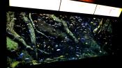 Georgia Aquarium Fish 2