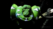 Georgia Aquarium Snake