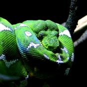 Georgia Aquarium Snake 2