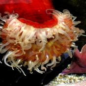 Georgia Aquarium Porcupine 1