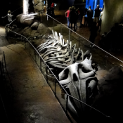 Georgia Aquarium Bones