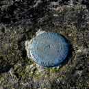 Mt Marcy: Yellow Foot Trail to Marcy : Marker